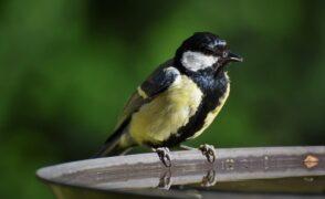 Les oiseaux des jardins !